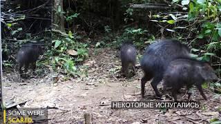 Реакция диких животных на установленное в лесу зеркало
