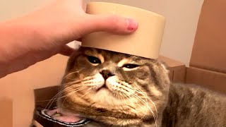 CAT VIDEOS TO KEEP YOU WARM! Funny Cat Videos