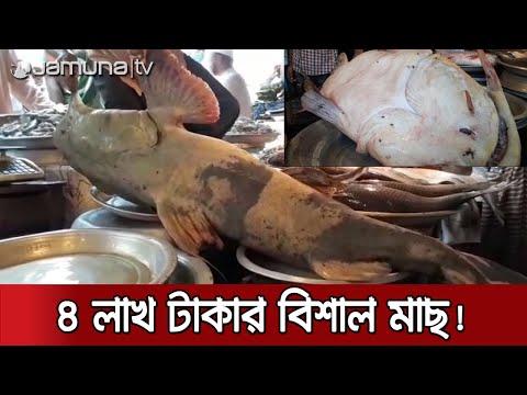 সাড়ে চার মন ওজনের বাঘা আইড় মাছ, দাম চার লাখ! | Sylhet Big Fish