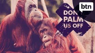 Palm Oil Ban - Behind the News
