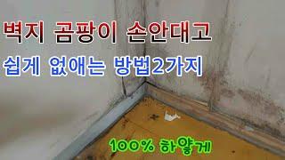 벽지 곰팡이 쉽게 없애는 방법 !! 100%복원