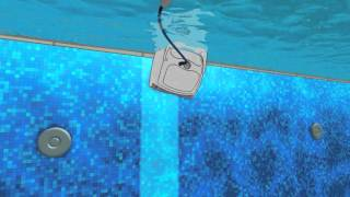Dolphin pool cleaner - waterline scrubing