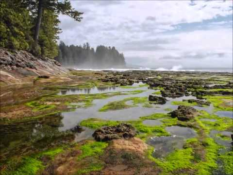 Rocky Intertidal Zone