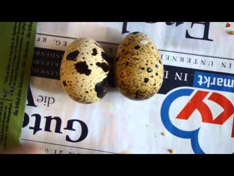 Какое строение яйца - из чего оно состоит
