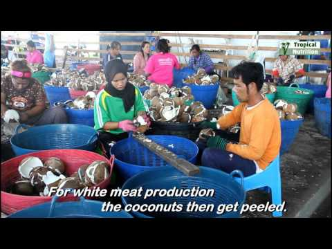 Tropical Nutrition Thailand   Coconut Oil Production