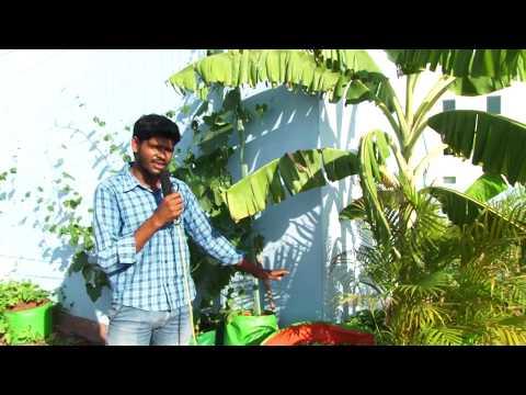 watering plants in terrace garden hot sun or  during summer season