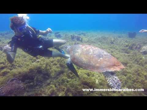 Une tortue en manque d'amour, Martinique Le Diamant, avec Plongée Immersion Caraïbes