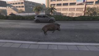 Stream: GTAV Animal Morph Showcase