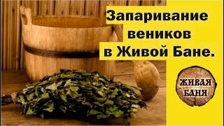Запаривание веников для бани. Живая Баня у Ивана Бояринцева представляет.