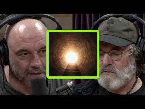 Why Paul Stamets Couldn't Trip on Mushrooms with His Dying Father