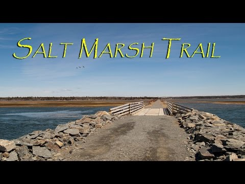 Salt Marsh Trail. Cole Harbour, Nova Scotia