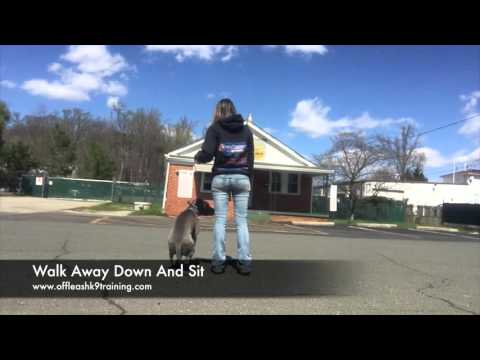 8-Month Old Pit Bull, Keyser! Electronic Collar Trained Pit Bulls | Best Pit Bull Training