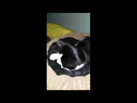 Emotional cat video (must watch) small documentary