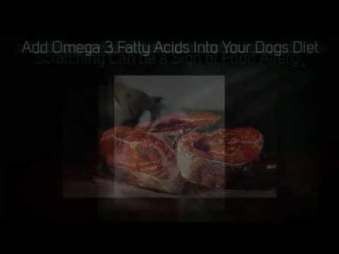 homemade diabetic dog food | homemade dog food | homemade dog treats | dog food homemade | easy