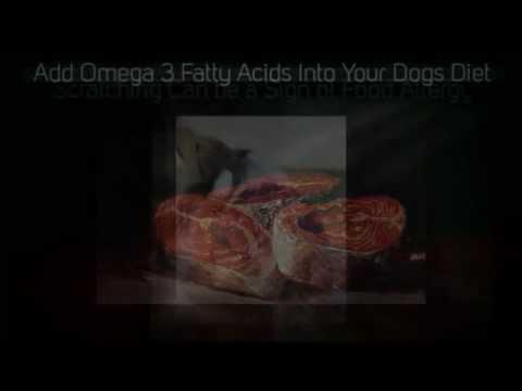 homemade diabetic dog food | homemade dog food | homemade dog treats | dog food homemade | easy