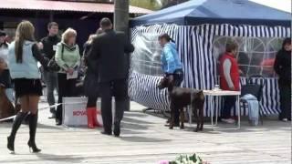 Выставка собак г. Таганрог