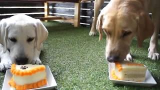 レオが我が家に来て1ヶ月が経ち、誕生4ヶ月を犬用ケーキで祝いました...