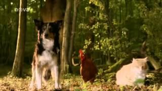 Brémští muzikanti - Pohádka bratří Grimmů