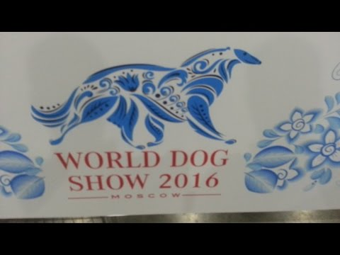 WDS 2016, Finnish spitz, females,open&working class