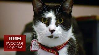Какая музыка нравится кошкам?