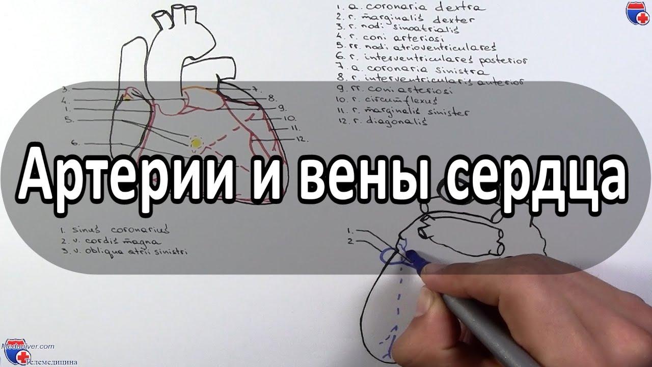 Антон к dexter masterforex-v mt4 requote