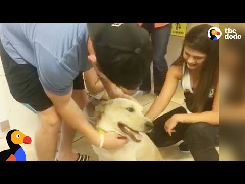 Missing Dog Reunited With Family After Car Accident | The Dodo