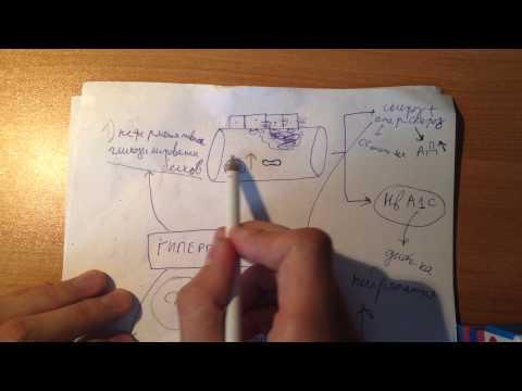 Патогенез Сахарного Диабета 1 и 2 типов (часть 2)