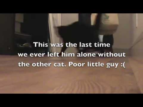 Talking Cat Left Home Alone
