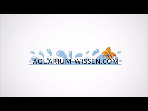 08 einbringen von wurzeln in ein aquarium youtube. Black Bedroom Furniture Sets. Home Design Ideas