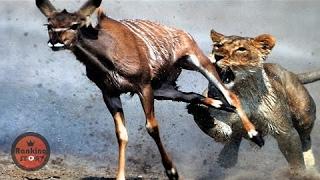 실제로 카메라에 포착된 동물들의 미친 싸움 14