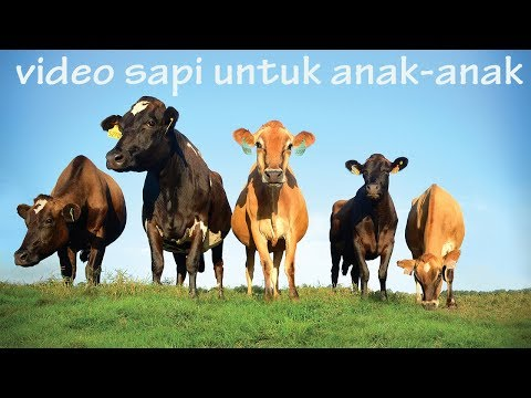 Cow videos for kids | animal sounds for children to learn