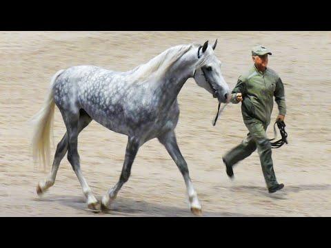 Вопрос: Какие породы лошадей выращивают на Хреновском конном заводе?