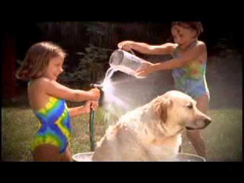 Atlantic Animal Hospital - Kids and Pets.wmv