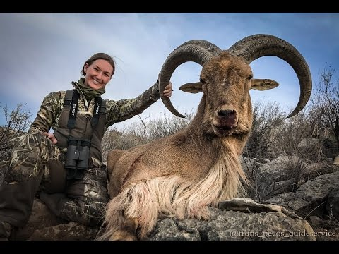 Texas Free Range Aoudad Hunt With Trans Pecos Guide Service