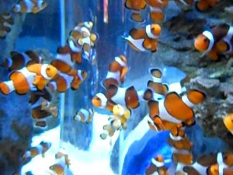 Two oceans aquarium finding nemo fish tank youtube - Aquarium nemo ...