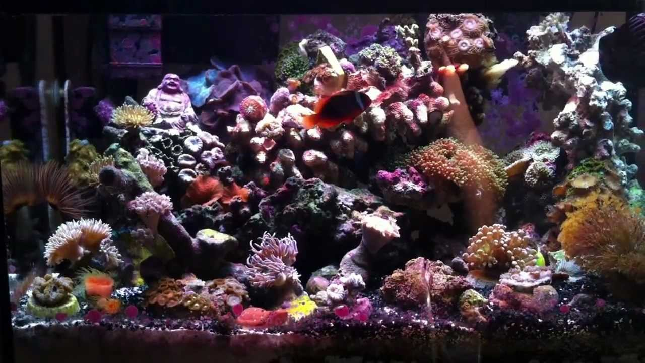 10 gallon saltwater aquarium the best nano setup youtube for How to make saltwater for fish