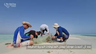 التخلص من شباك الصيد المهملة والغير مرئية في البحر الأحمر