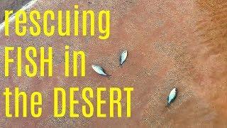 MONSOON STORM ARIZONA - Fish on the streets & Native