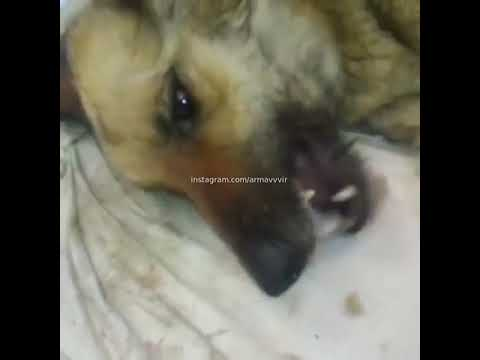 Живодер издевался над собаками в Армавире (4.06.19)
