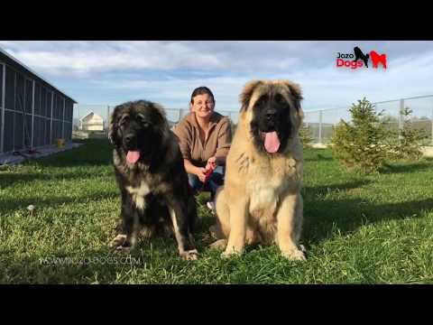 BIG DOGS Vinota & Masa