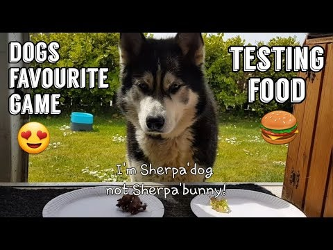 A dogs favourite game | FOOD FOOD FOOD