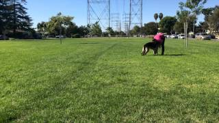 How To Teach Dog To Fetch And Bring It Back, The Basics