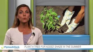 Plant a tree for added shade this summer