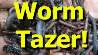 Worm Tazer! Catching tons of earthworms for bait with electricity.