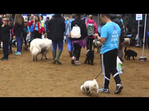 RSPCA BIG Walkies London 2015