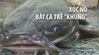 Người Cà Mau bắt cá trê khủng siêu chuyên nghiệp bằng nò