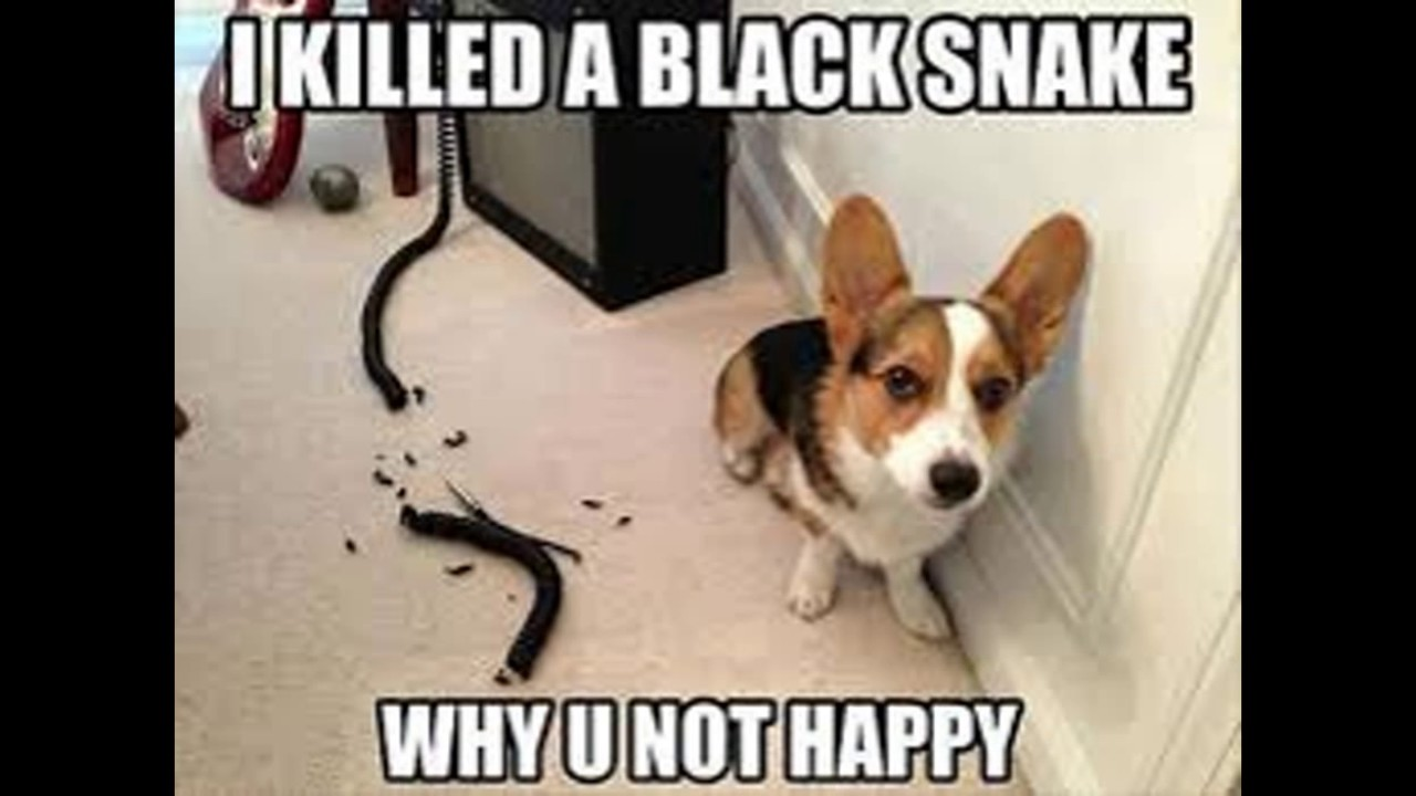 Image result for puppy meme
