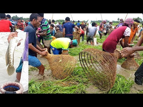 How Is This Fishing? About 1,000 Peoples Catching Fish Together Using Traditional Fishing Tools