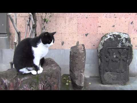 The Cat And Khachkar (Yerevan, Armenia)