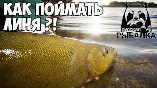 Русская Рыбалка 4 - На рыбалку за линём! На что и где ловить трофейную рыбу?